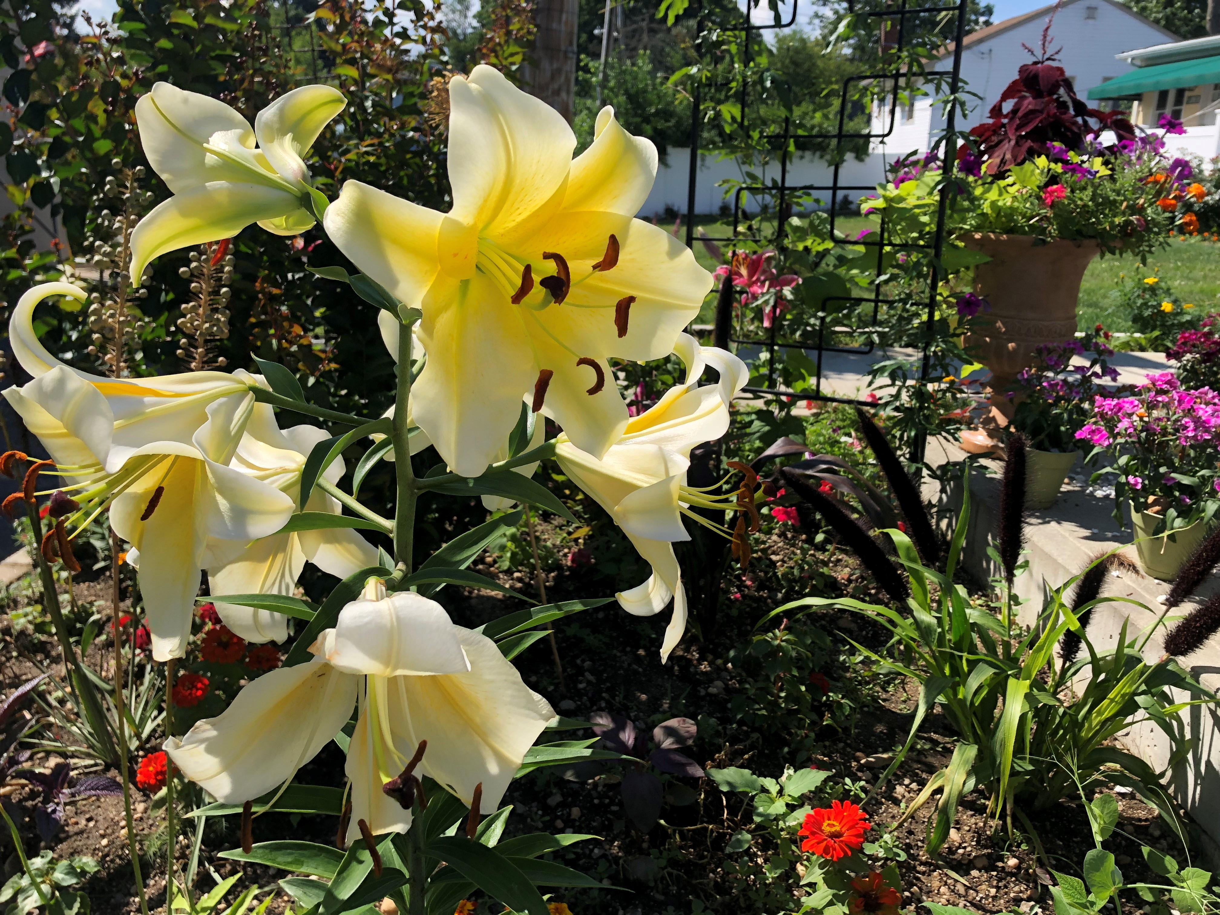 Blooms at ICLI